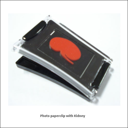 Photo-paperclip-with-Kidney